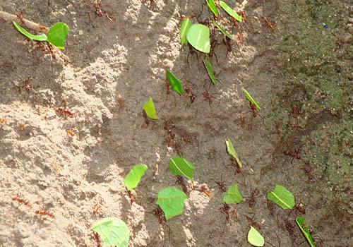 Fotos de insectos existentes en el jard n bot nico san for Insectos del jardin